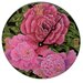 Peonies Decorative Wall Clock