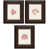 Nature II/III/IV Wall Art (Set of 3)