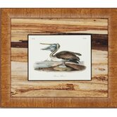 Lovely Water Fowl by Audobon Traditional Art (Set of 3) - 17&quot; x 20&quot;
