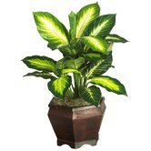 Silk Golden Dieffenbachia Plant with Wood Vase in Green