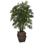 Mini Bamboo Palm with Decorative Vase
