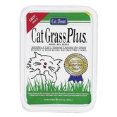 Cat Grass Plus Catnip Seeds