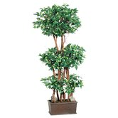 "48"" Mini Ficus Wall Tree with Wooden Container in Green"