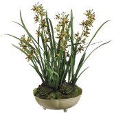 "26"" Mini Cymbidium Orchid Plant with Moss/Succulent in Ceramic Bowl"