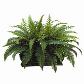 17&quot; Boston Fern with Long Metal Container