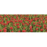 Ultimate Tulips Panoramic Wall Mural