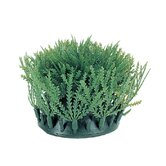 Marina Rootscaper Willow Moss - 2 Pack