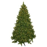 Evergreen Fir Prelit Christmas Tree with 700 Clear Lights
