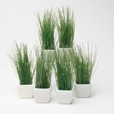 Botanicals Potted Wheat Grass (Set of 6)