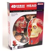 4D Vision Human Head Anatomy Model