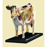 4D-Vision Cow Anatomy Model