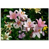"Pink Lilies by Kurt Shaffer, Canvas Art - 16"" x 24"""