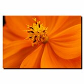 "Orange Flower by Kurt Shaffer, Canvas Art - 18"" x 24"""