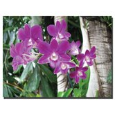 Purple Orchid by David Canvas Art