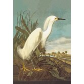 Snowy Egret Canvas Art