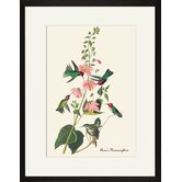 Anna's Hummingbird Framed and Matted Print