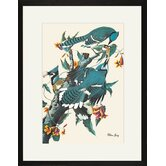 Blue Jay Framed and Matted Print