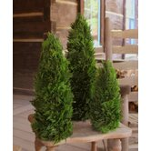 Cypress Cone Topiary (Set of 3)