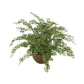 Silk Maidenhair Fern in Bowl
