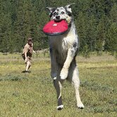 Hover Craft Flying Disc Dog Toy