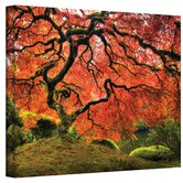 John Black ''Japanese Tree'' Canvas Art