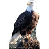Eagle Cardboard Stand-Up