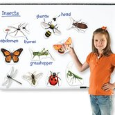 Giant Magnetic Insects (Set of 14)