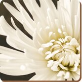 Chrysanthemum Coasters  (Set of 6)