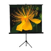 "70"" x 70"" Tripod Screen in Matte White"
