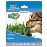 Kitty Cat Grass