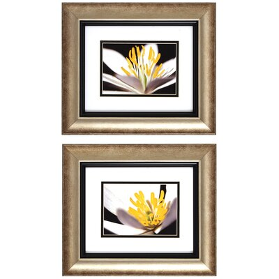 Propac Images White Poccoon I / II Wall Art (Set of 2)