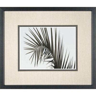 Phoenix Galleries Palm Leaf 2 Framed Print