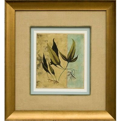 Phoenix Galleries Tropical Fern 6 Framed Print