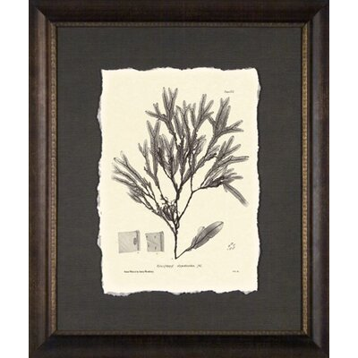 Phoenix Galleries Seaweed Plate Clove Framed Print