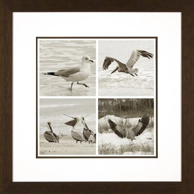 Phoenix Galleries Bird Quartet Framed Print