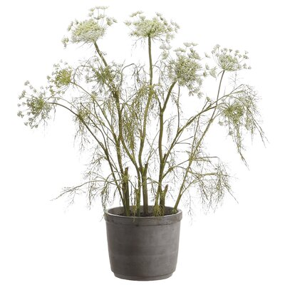 Tori Home Queen Anne's Lace in Cement Pot