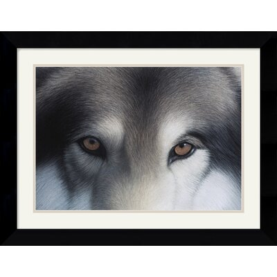 Eyes of the Hunter: Gray Wolf by Charles Alexander Framed Fine Art Print - 20.62