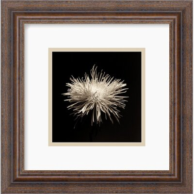"Amanti Art Flower Series I by Walter Gritsik Framed Fine Art Print - 12.30"" x 12.30"""