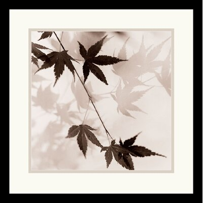 Amanti Art Japanese Maple Leaves No. 1 Framed Art Print by Alan Blaustein