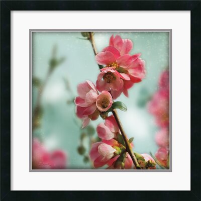 Quince Blossoms III Framed Print by Sue Schlabach