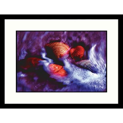 Beach Shells Framed Photograph -Pat Canova