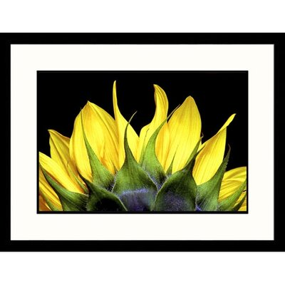 Top of Sunflower Framed Photograph