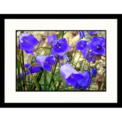 Great American Picture Alpine Flowers Framed Photograph
