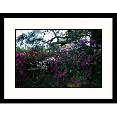 Azelea Bed Framed Photograph