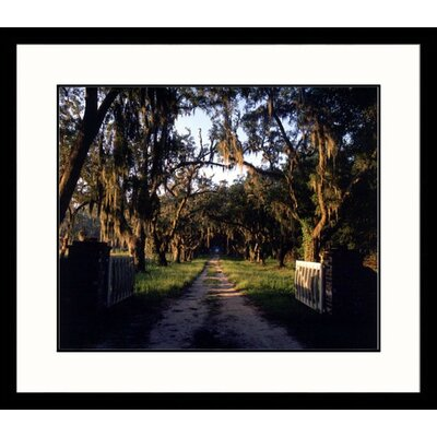 Great American Picture Trees Over Path, Ridgeland, South Carolina Framed Photograph - Eric Horan