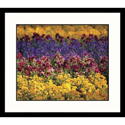 Dancing Flowers Framed Photograph
