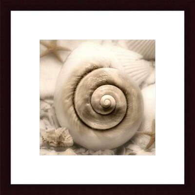 Barewalls Iridescent Seashell I by Donna Geissler Wood Framed Art Print