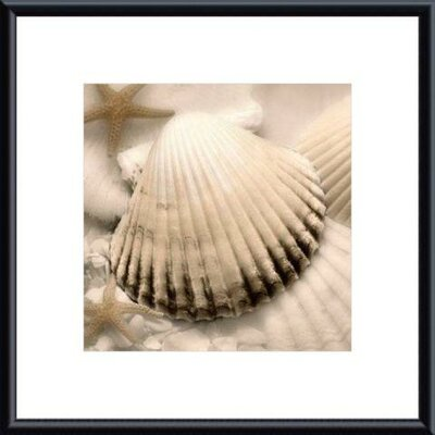 Iridescent Seashell II by Donna Geissler Metal Framed Art Print