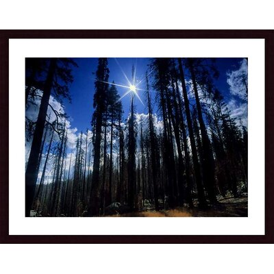 Barewalls Star Bright Wood Framed Art Print