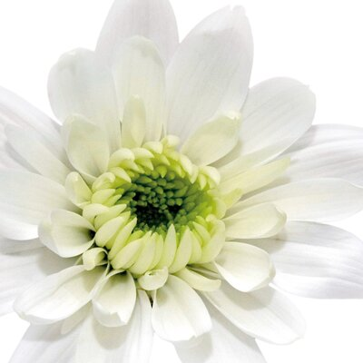 Deco Glass White Daisy Head Wall Decor